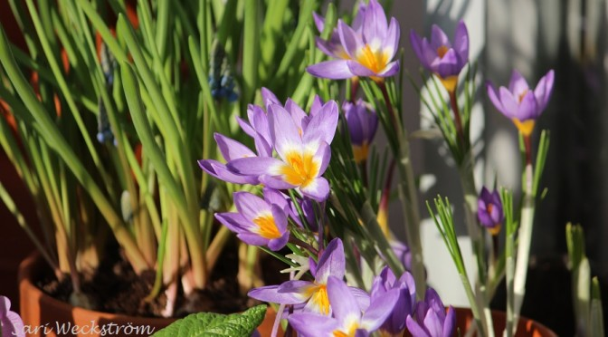Keväisen lämmin viikko parvekkeella