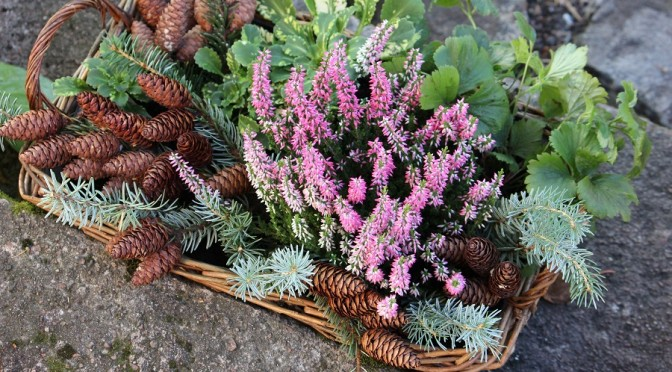 Syysasetelma oman pihan kasveista