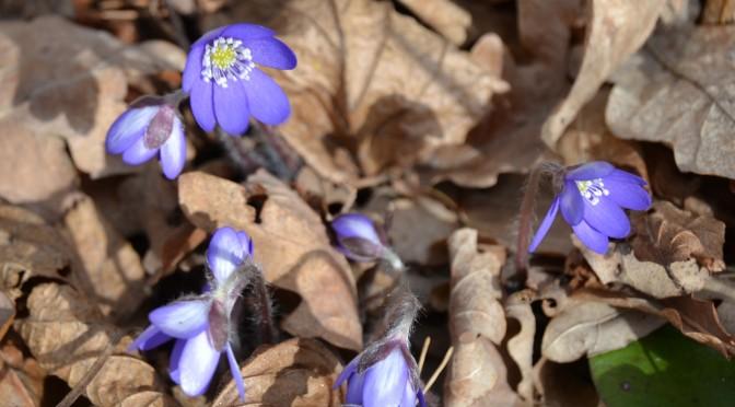 Kevät puuhastelua puutarhassa