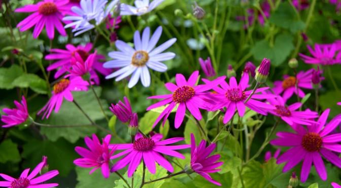 Kesäkukkien väriloistoa